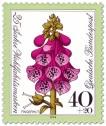 Blume: Roter Fingerhut