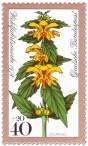 Goldnessel (Waldblume)