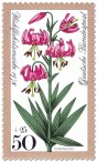 Türkenbund (Waldblume)
