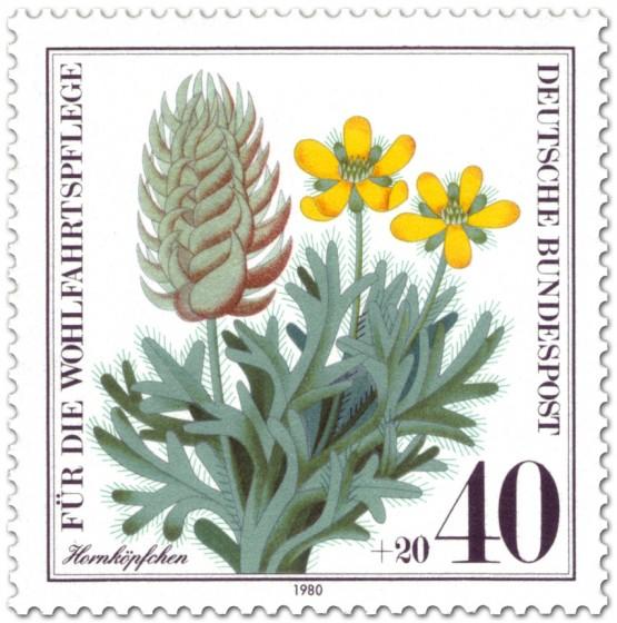 Briefmarke: Hornköpfchen (Wildkraut)
