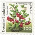 Preiselbeeren (Vaccinium vitis-idaea)