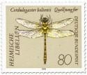 Zweigestreifte Quelljungfer (Cordulegaster boltonii)