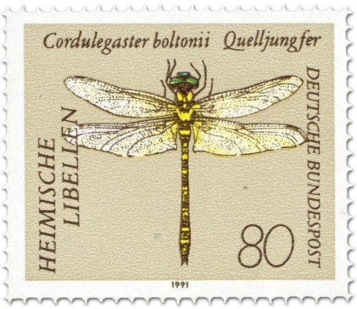 Briefmarke: Zweigestreifte Quelljungfer (Cordulegaster boltonii)
