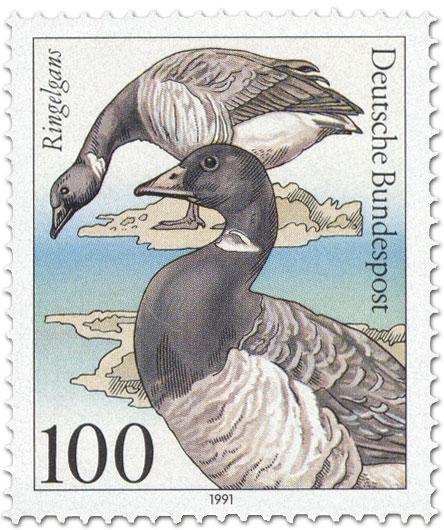 Briefmarke: Ringelgans